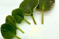 Набор умелого цветовода 40 листьев