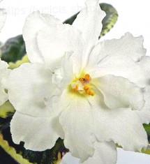 РС-Цветок Лотоса