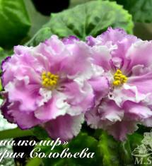 ЛЕ-Ирландская Роза
