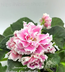 ПТ-Розита