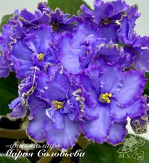 Blue Dragon (LLG/P.Sorano)
