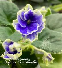 Cajun's Blue Bayou(B. Thibodeaux)