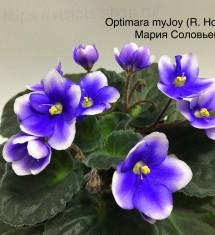 Optimara MyJoy (Holtkamp)