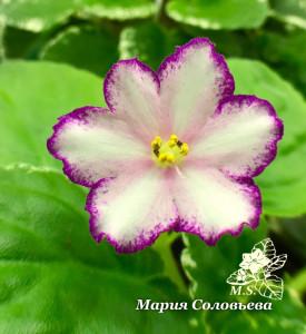 Strawberry Spinner (P. Sorano/LLG)